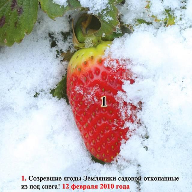 Книга «Источник жизни. Том 2» (Николай Левашов)